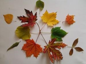 """РИОСВ - Монтана обявява конкурс за апликация """"Чудата есен"""""""