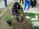 Да засадим дърво